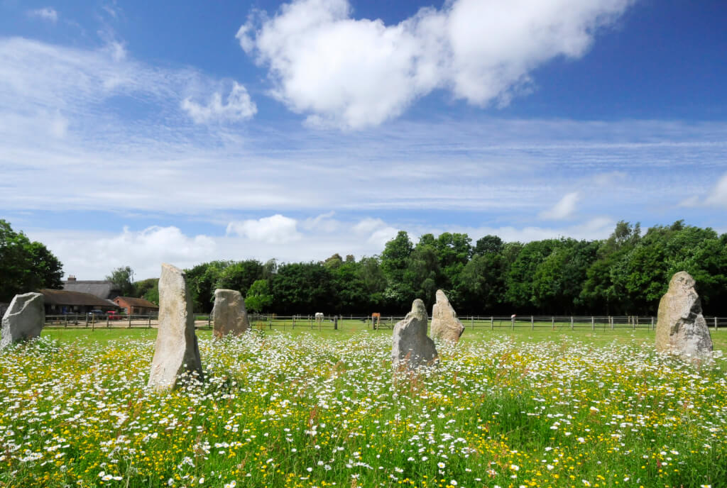 Standing Stones standing proud of a sea of buttercups and daisies