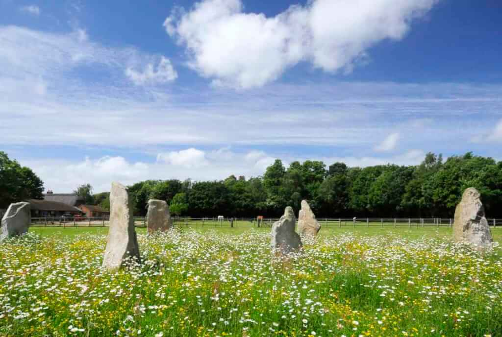 This colour photo shows six standing stones in a field of green grass which is overrun with buttercups and daisies. There is bright sunshine. Behind the stones, in the middle distance, is a wooden post and rail fence and beyond that a flat green field. The far side of the far field has a row of mature trees in full leaf. They seem to be mostly oak. There is a low building in the distance behind the leftmost stones. The sky is blue with some very high thin white cloud and one or two fluffy white good-weather clouds that are lower.