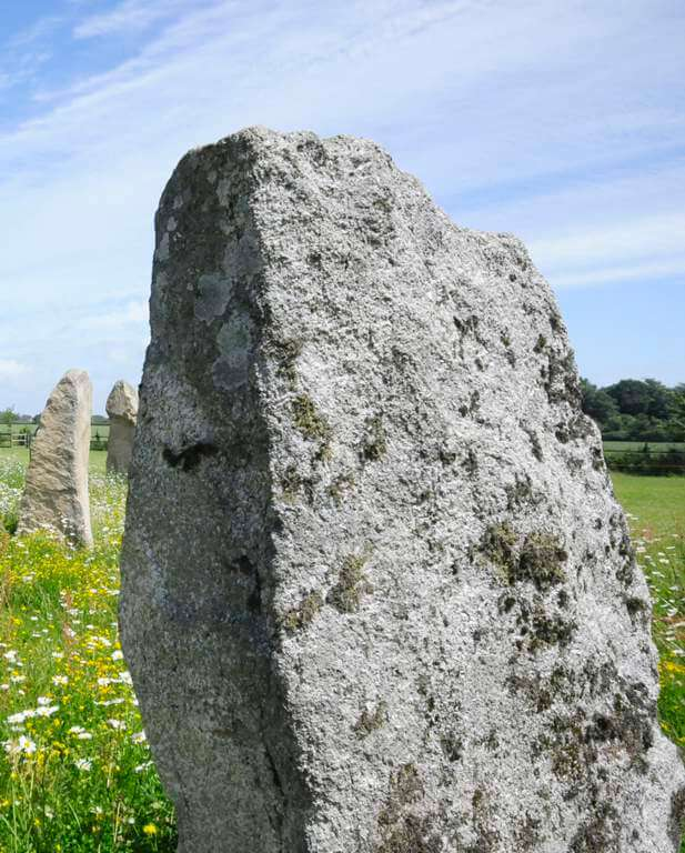 This is a close-up colour photo of a standing stone in a green grass field. It is clearly part of an arrangement of stones because there are two other standing stones behind it and to its left. Between the stones are some quite tall buttercups and daisies. The distant boundary of the field is formed by a green hedge separating it from another green field behind. Beyond the second field is a stand of trees in leaf which look like oak trees. The sky is blue, made hazy by some very high, very fine thin white cloud, covering most of the sky.