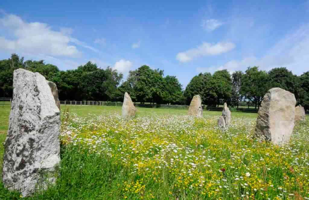 This is a colour photo of some standing stones in a field. The tallest stones are about 1.8m high and some form a curve, away from us and from left to right. The nearest stone is a pal grey, but the others seem to be slightly yellower. There are four forming the curve and two others apparently near the centre of the curve. The stones seem to be placed in a close-cut green grass field, but the inner grass between the stones has been allowed to grow and is full of quite tall buttercups and daisies. The boudary of the field has a wooden post-and-rail fence and several oak trees, about 20 years old. The sky is blue and there are some fluffy white good weather clouds.
